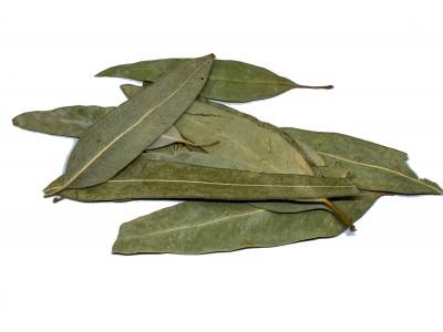 Ευκάλυπτος Φύλλα Αλβανίας