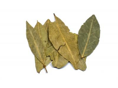 Φύλλα Δάφνης