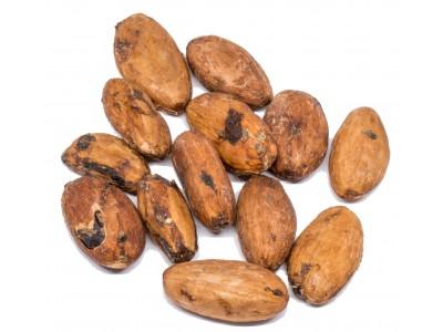 Cocoa Beans Περού